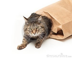 cat-out-bag-17642659